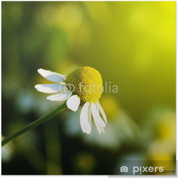 Poster Madelief - Bloemen
