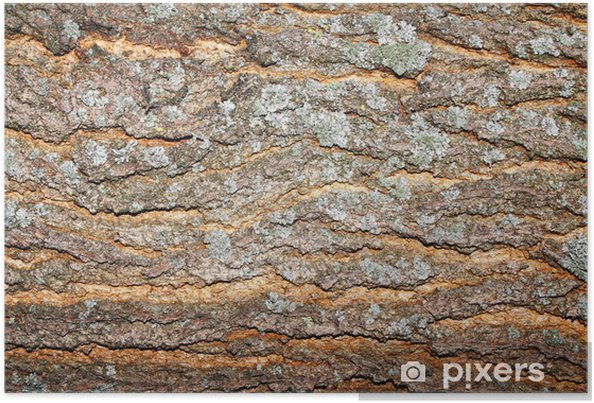 Póster Madera textura de la corteza - iStaging