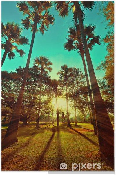Poster Magnifique coucher de soleil avec des rayons de soleil au parc de palmiers tropicaux - Plage et les tropiques