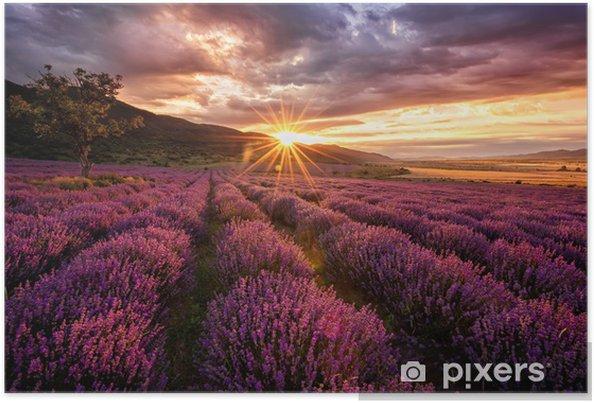 Poster Magnifique paysage avec un champ de lavande au lever du soleil -
