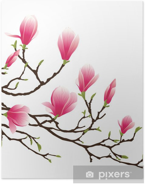 magnolia blossom Poster -