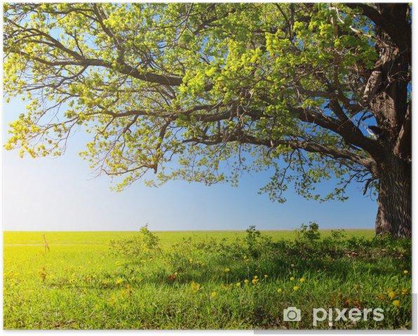 Majestic tree Poster - Destinations