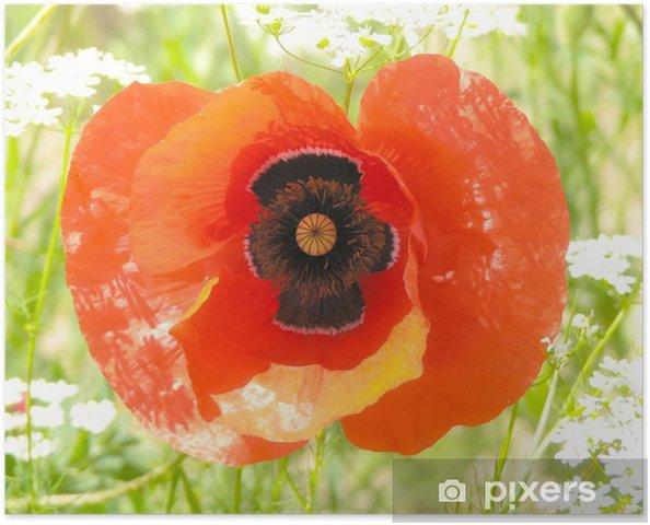 Poster Mak - Fleurs