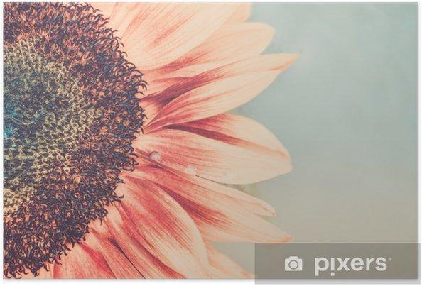 Poster Makro skott av blommande solros - Växter & blommor