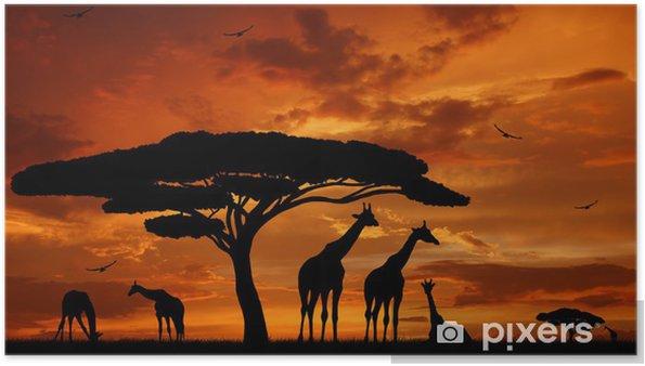 Póster Manada de jirafas en la puesta del sol -