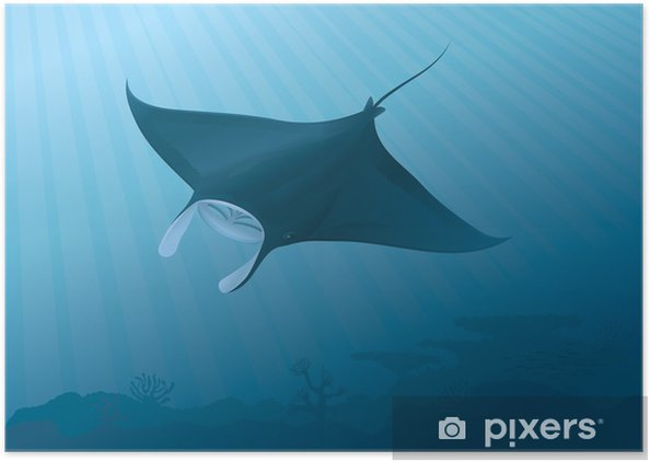 """Poster Manta Ray volant au-dessus du fond marin. """"gradients compatibles Full"""" - Animaux marins"""