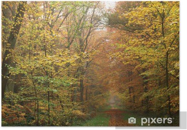 Poster Matin brumeux dans la forêt - Saisons