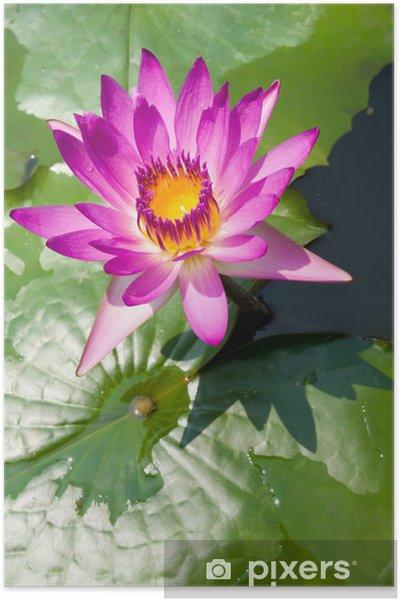 Mauve Lotus Flower Poster Pixers We Live To Change