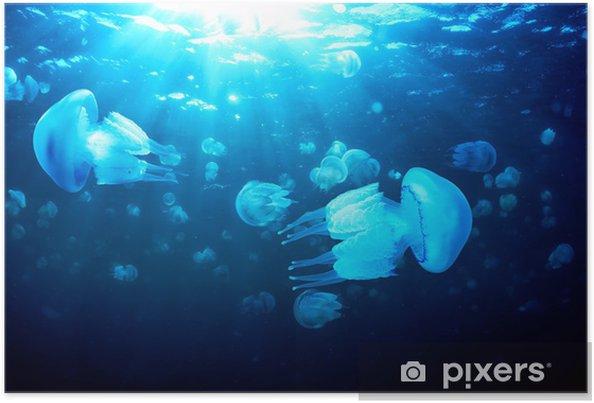 Póster Medusas flotando en el agua azul profundo, Mar Negro - Animales marinos