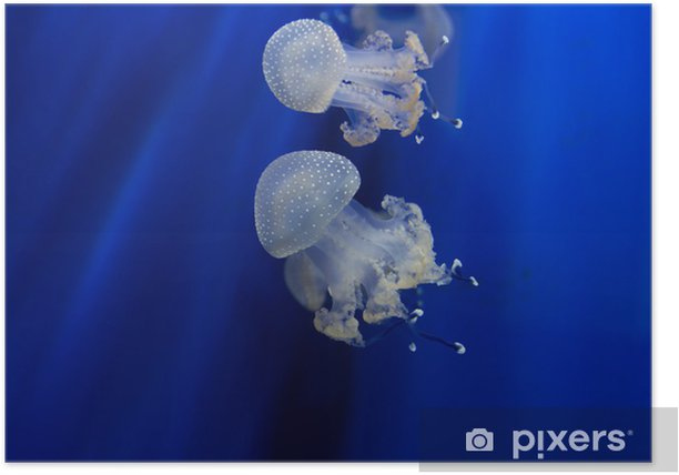 Meduse Poster - Aquatic and Marine Life