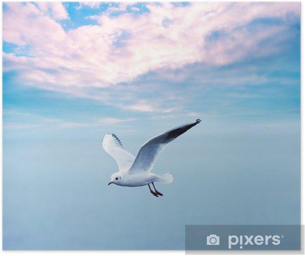 Poster Meeuw stijgende tegen een clouds sky - Thema's