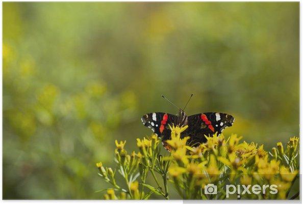Poster Mignonne petite sirène amiral papillon sur une fleur jaune - Autres Autres