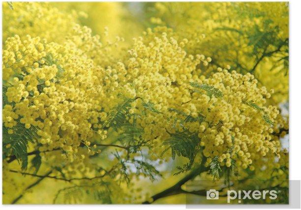 Mimose fiorite simbolo otto marzo Poster - Gender Issues