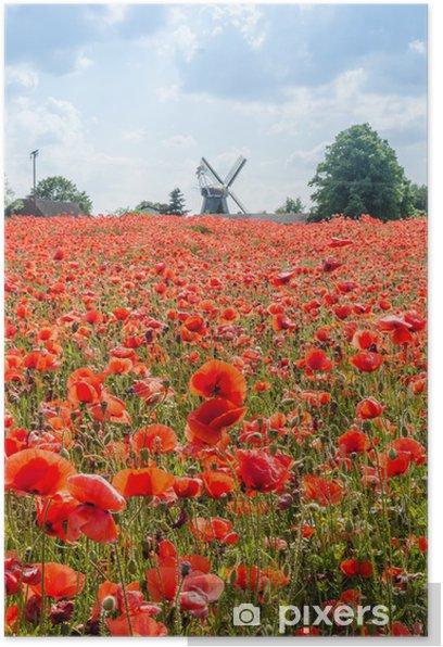 Poster Mohnblumenfeld - Fleurs