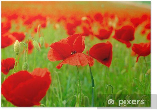 Poster Mohnfeld - Fleurs