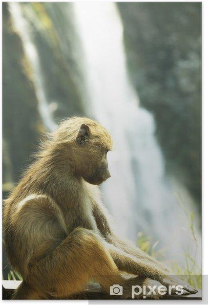 Monkey Poster - Mammals