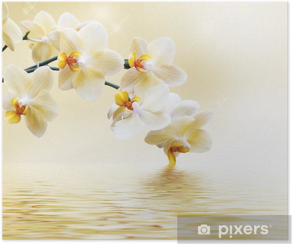 Poster Mooie witte orchidee -