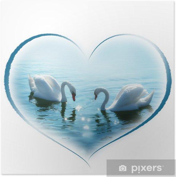 Poster Mooie zwanen paar in een hartvorm - Zwanen