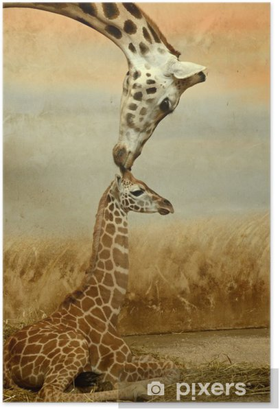 Mother-giraffe and baby-giraffe Poster - Themes