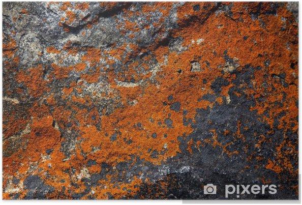 Poster Motifs abstraits de lichen sur un rocher - Montagne