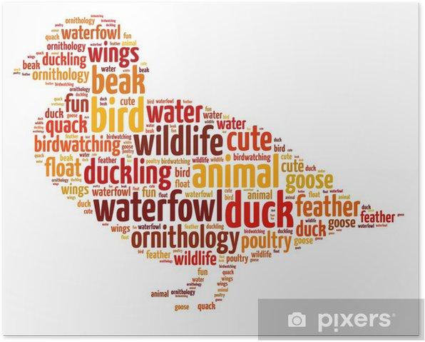 Poster Mots illustration d'un canard sur fond blanc - Oiseaux