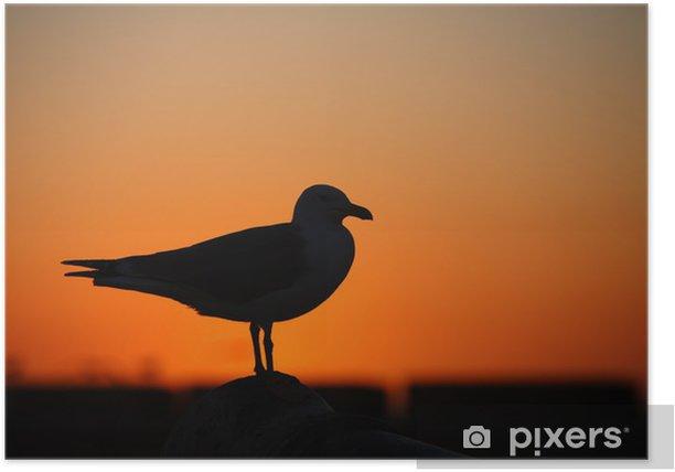 Poster Mouette au coucher du soleil - Oiseaux