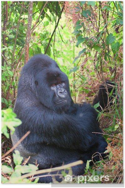 Poster Mountain Gorilla Silverback - Mammifères