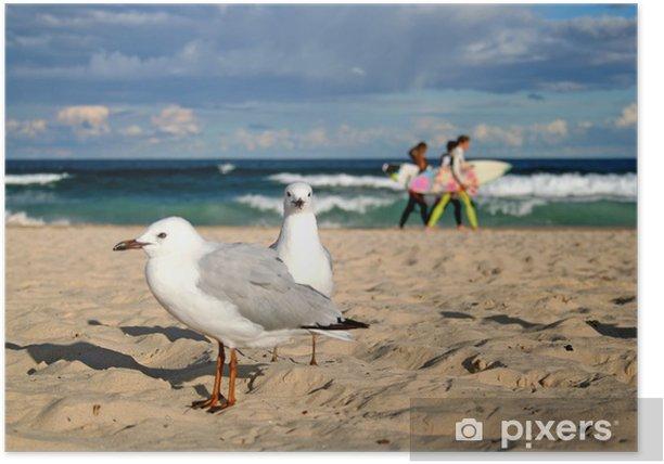 Möwen am Bondi Beach Poster - Oceania