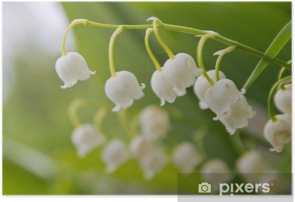 Poster Muguet - Fleurs