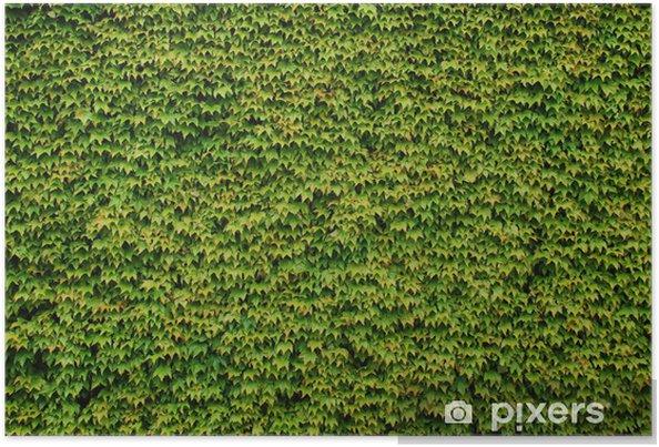 Poster Mur couvert de feuilles vertes de la plante décorative - Textures