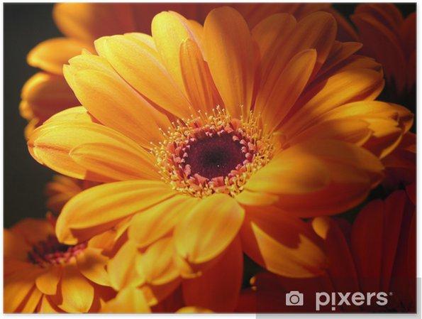 Póster Naranja gerbera - Flores