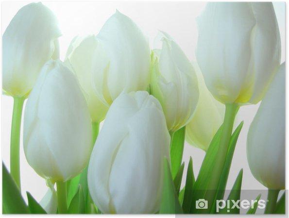 Poster Närbild av gäng vita tulpaner på vit bakgrund - Teman