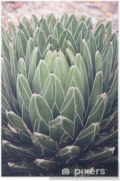 Poster Närbild på agave suckulent växt, selektiv fokusera, toning - Växter & blommor