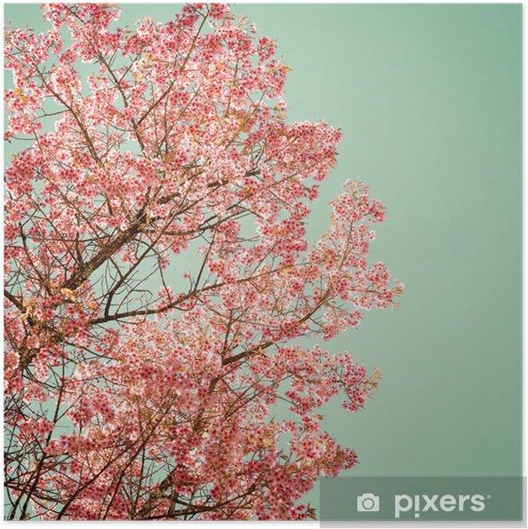 Poster Natuur achtergrond van de mooie van de boom kersen roze bloem in de lente - vintage pastel kleurfilter - Bloemen en Planten
