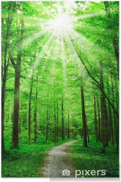Poster Natuur. pad in het bos met zon - Thema's