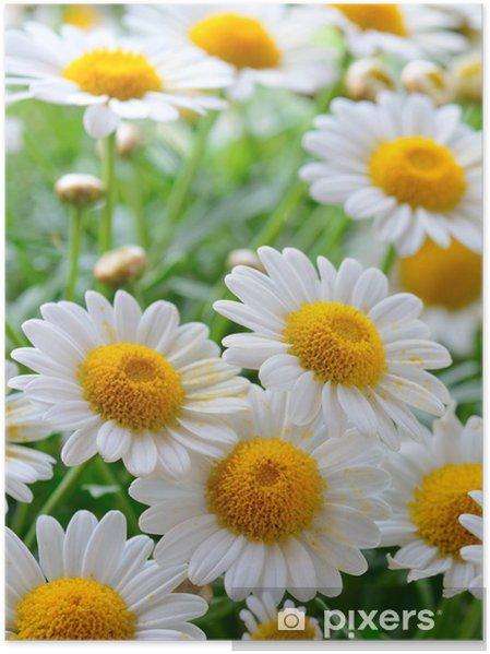 Póster Naure poder - Flores