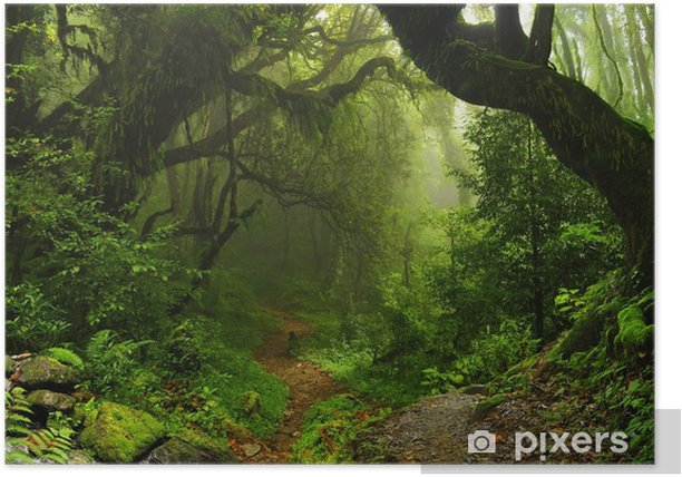 Nepalese jungle forest Poster - Brazil