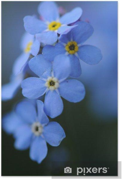 Poster Niezapominajki - Fleurs