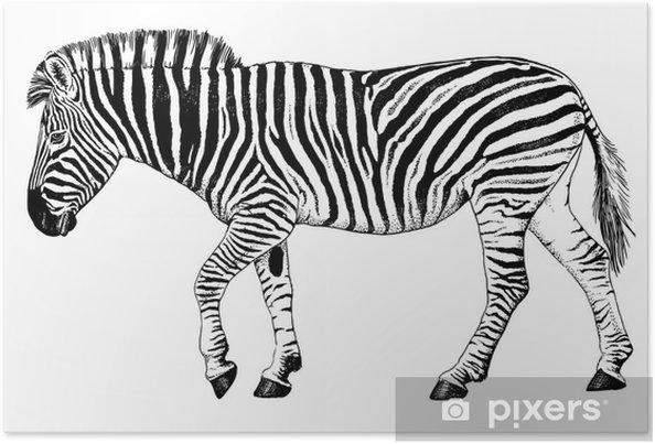 Poster Noir Et Blanc De Dessin Vectoriel D Une Marche De Zebre
