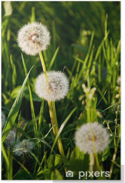 Poster Nous TROJE - Plantes