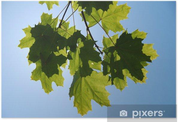 Oak Poster - Agriculture