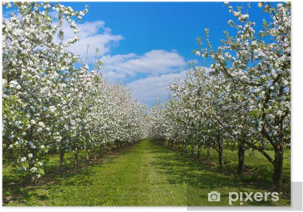 Obstwiese Poster - Apple trees