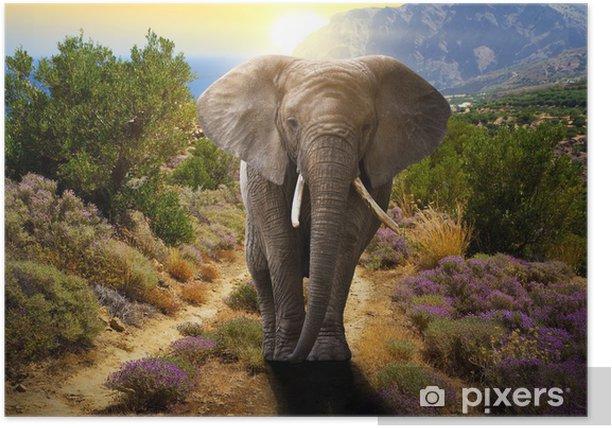 Poster Olifant lopen op de weg bij zonsondergang - Thema's