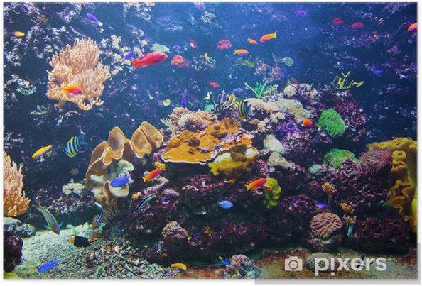 Poster Onderwater scène met vissen, koraalrif - Koraalrif