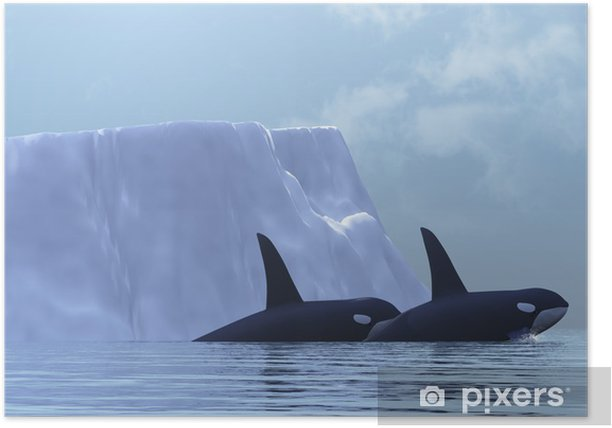ORCA Poster - Aquatic and Marine Life