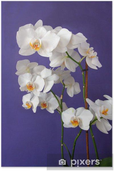 Poster Orchidée blanche sur fond lila - Fleurs