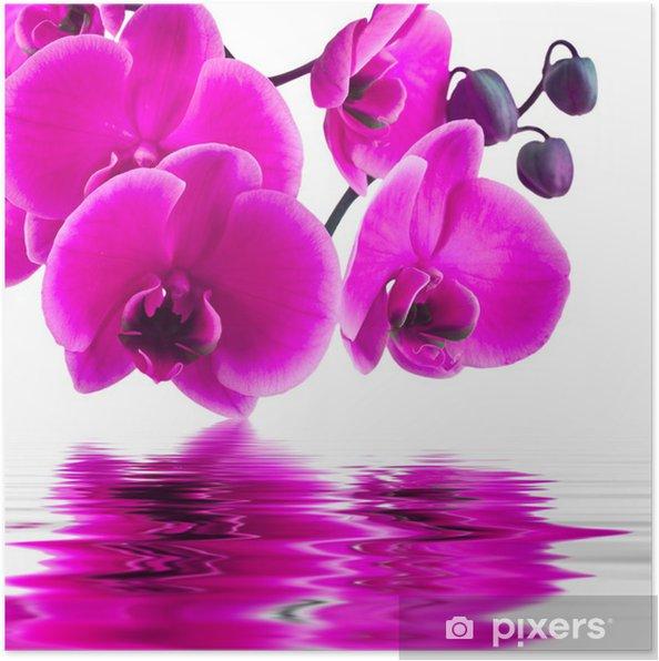 Poster Orchidee bloem in close-up met reflectie in het water - Thema's
