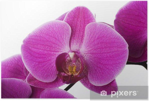 Poster Orchidee Rose Decoration Exotique Passe Temps Fleur