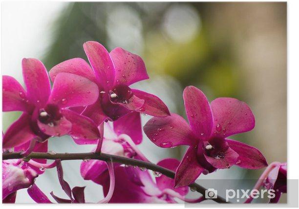 Poster Orchidée - Fleurs