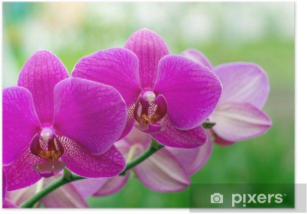 Poster Orchidée - Thèmes